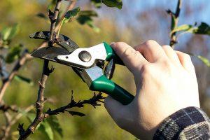 обрезка растений осенью