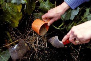 Подкормка капусты удобрениями