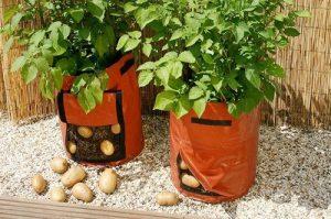 посадка картофеля в мешках с землей