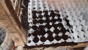 Редис в ячейках из под яиц