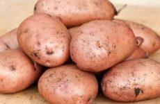 картофель жуковский описание сорта фото отзывы
