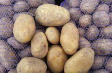 картофель бриз описание сорта фото отзывы