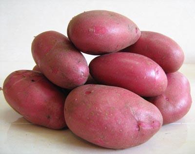 картофель рокко описание сорта фото отзывы
