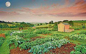 Правильный посев моркови — залог урожая