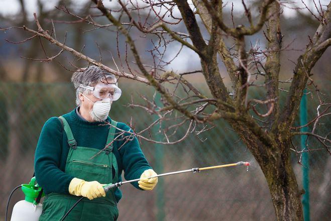 Обработка сада осенью от вредителей и болезней