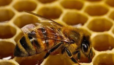 Осенняя подкормка пчел сахарным сиропом: сроки, рецепты