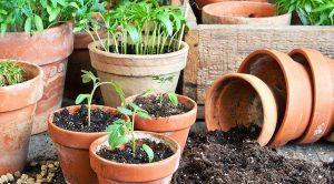 Когда сажать помидоры на рассаду в 2018 году?