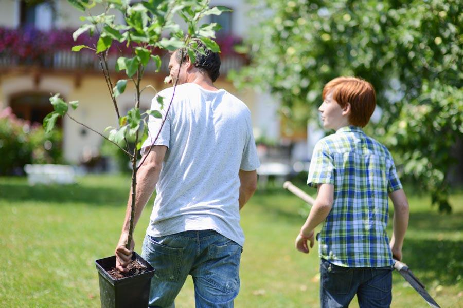 Когда лучше сажать саженцы плодовых деревьев весной или осенью?