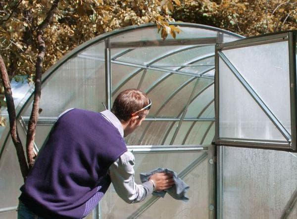 Чем обработать теплицу после фитофторы осенью?