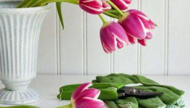как срезать тюльпаны для букета