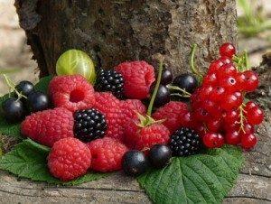 Плодовые кустарники\Ягоды