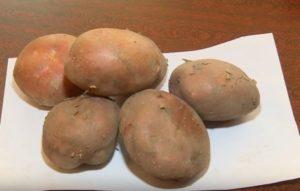 """плоды картофеля """"Раннее утро"""""""