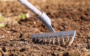 Почва для посадки лука