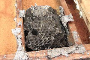Борьба с осами под крышей: обзор традиционных и народных средств
