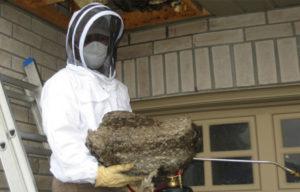 Как избавиться от ос на даче и дома: эффективные методы и средства