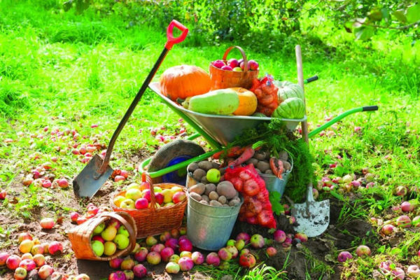 Какие фрукты и овощи есть осенью. Сезонные овощи и фрукты осени: польза и варианты приготовления