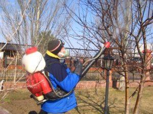 выращивание сливы на Урале