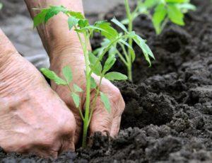 Благоприятные дни по лунному календарю садовода и огородника на апрель