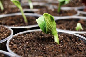 Сроки посадки тыквы на рассаду в 2020 году
