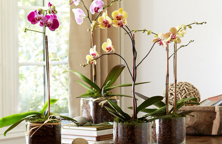 gorshok-dlja-orhidei