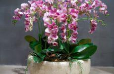 Как Посадить Орхидеи В Один Горшок