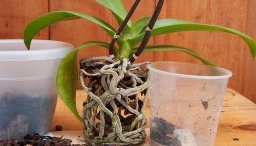 Кора сосны для орхидей — выбор коры и добавок, обработка перед посадкой