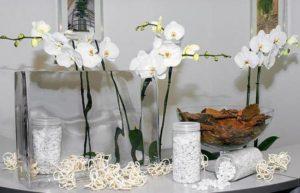 orhideja v stekle