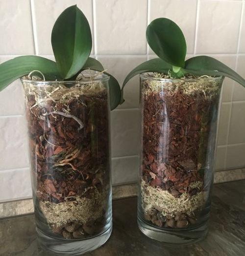 Орхидея в закрытой системе