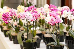 Разные сорта орхидей