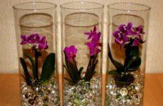 орхидея в гидрогеле