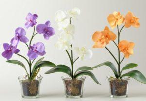 stekljannyj gorshok dlja orhidei