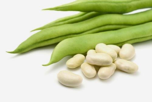Белая фасоль: польза и вред для здоровья женщин и мужчин, сорта, выращивание, свойства