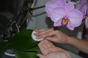 Применение перекиси водорода для орхидей