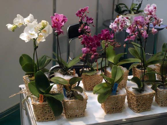 Уход за Орхидеями