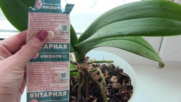 Янтарная кислота для орхидеи как удобрение