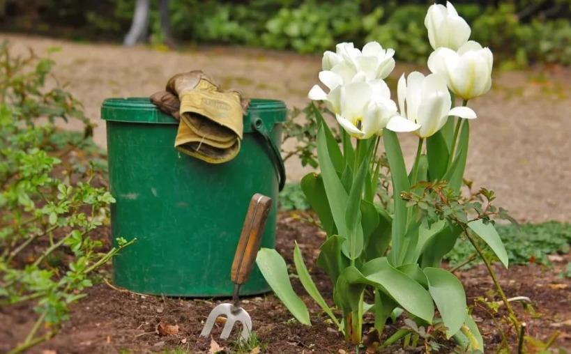 Тюльпаны отцвели