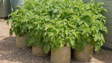 Kartofel-v-meshkah