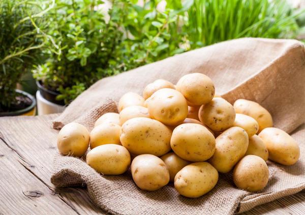Картофель сорта Чародей - Сажанец