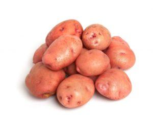 Картофель Снегирь: описание сорта и характеристика, урожайность, отзывы, фото