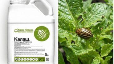 Инсектицид «Калаш» от колорадского жука