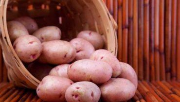 отзывы о картошке Хозяюшка