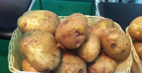 описание картошки сорта Луговской