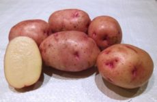 Картофель Снегирь
