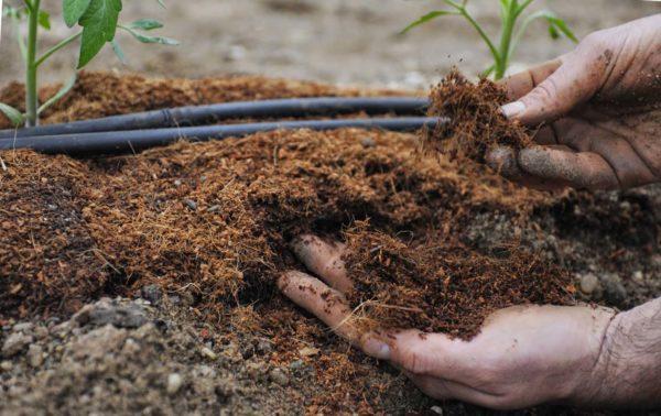 удобрение растения
