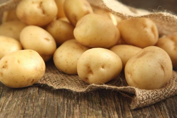 описание картошки сорта Молли