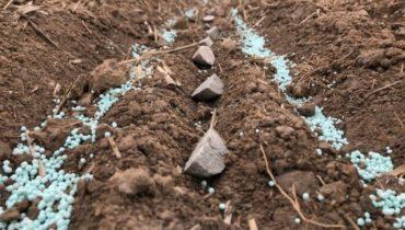 Чем удобрить картофель при посадке