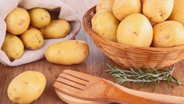 Картофель: чем полезен, вред для организма человека, исследования