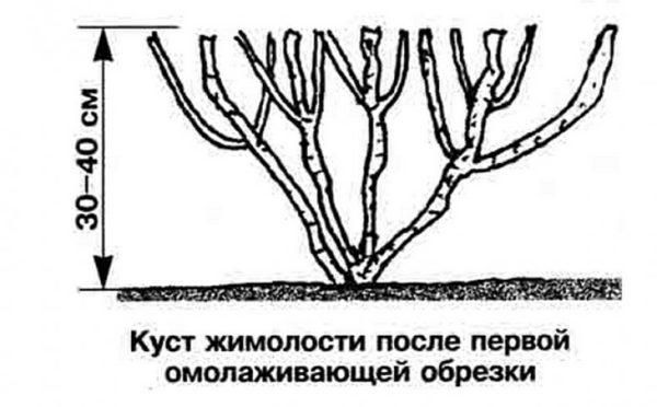 формирование куста