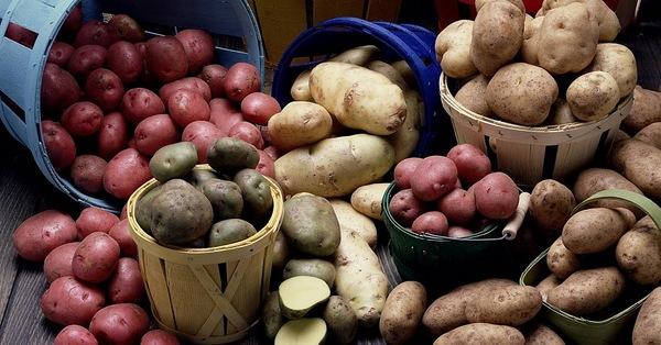 сорта картофеля, выведенные в Белоруссии