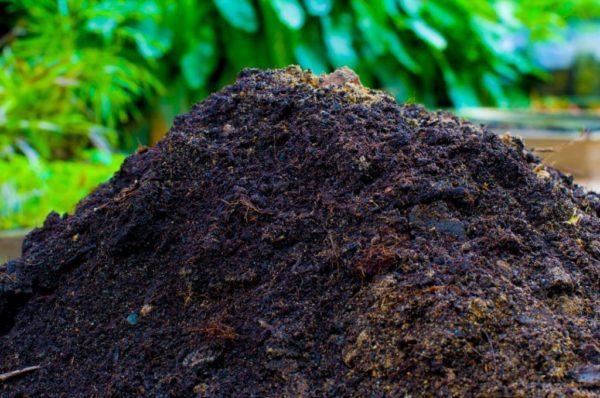 Высадка рассады огурцов в теплицу: как правильно сажать и ухаживать